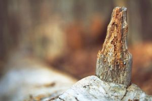 Log Stump by Miles-Sinclair