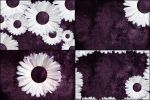 4 Free Purple Daisy Tumblr Backgrounds by ibjennyjenny
