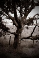 lonesome tree by awjay
