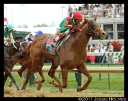 Animal Kingdom Wins the Derby by Jessie-kad