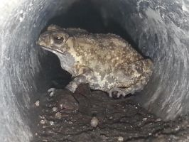 Toad 21Sep2014 2 by RiverKpocc