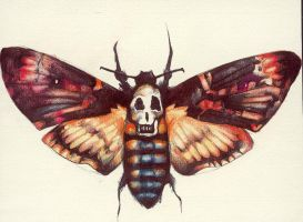 Death's-Head Hawk Moth. by KaterinaChadoulou