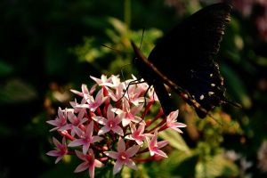 Butterfly close up by alektheplatypus