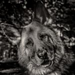 Ylva -Can I Have My Treat ? by AndersStangl