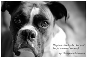 The Soul of a Dog:Boxer by dogs