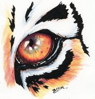 Eye of tiger by imcy