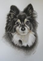 Dog Portrait by Abbyanna