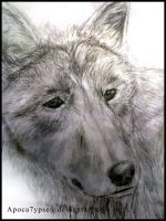 Realism 3 - Old Wolf.. by Apoca7ypse