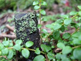 Miniature Stump by poiuytre00750