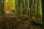 Bamboo Path 2 by Kimory-S