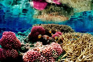 Coral Reefs Have Been Through This Before by Kajm