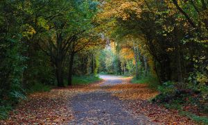 Autumn Avenue by danUK86