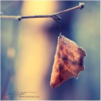 Frozen Leaf by Zemni