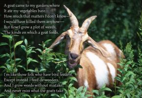 A goat poem by chemoelectric