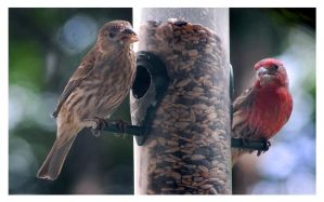 The Finch Connection by richardcgreen