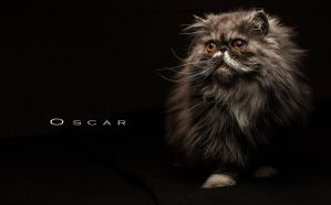 Oscar the Cat by DreamMover