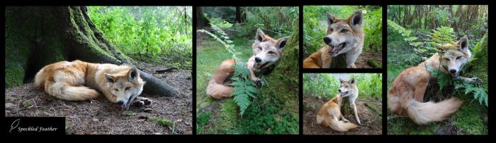 Open Mouth Red Coyote Plush Taxidermy by Speckled-Feather