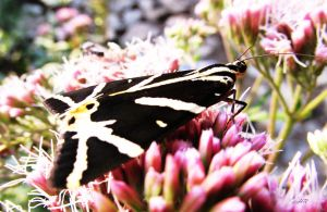 La pose du Papillon by Rachel1973