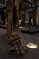 Dicraeosaurus foot by bookscorpion