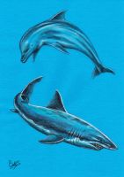 Dolphin and shark by Betty-S