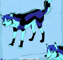 crazy wolf colors 2 by articfoxice