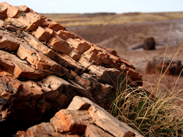 Petrified Forest - 2 by recursiveLoop