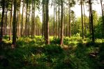 Forest Stock 23 by Sed-rah-Stock