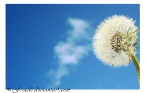 IMG_0629 by freede