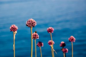 flowers in a blue world by torobala
