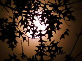 Oak Branches And Obscured Moon by Matthew-Beziat