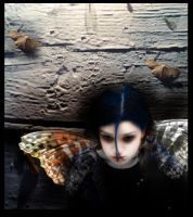 butterfly by coian