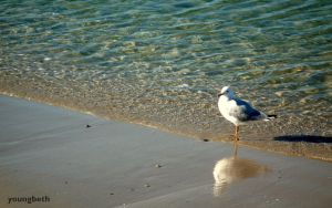 Seagulls 2 by youngbeth