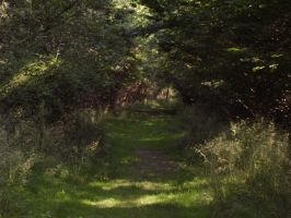 Hatfield forest 4 by pan77155