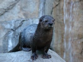 A Very Cute Sea Otter by stephuhnoids