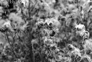Black and White by emmahileyphotography