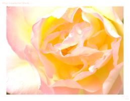 Kiss from a rose... by Jalokin