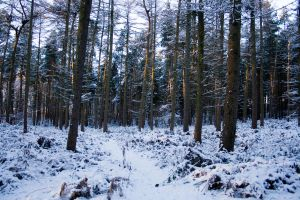 Snowy Woodland 20 by joannastar-stock