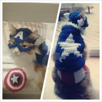 Captain Americat! by lillybearbutt