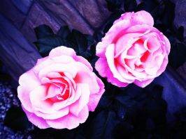 lighted roses by mysteriousfantasy