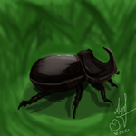 Rhinoceros beetle by sansan2111