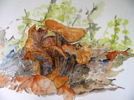 Mushrooms in the wood by lapoall