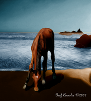 The horse and the sea by Experimentzeichner