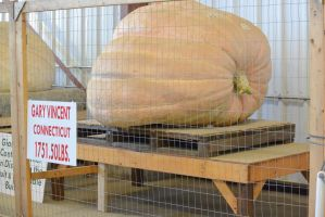Topsfield Fair, A Great Pumpkin by Miss-Tbones