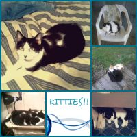 Collage of Kitties!! by MonsterH2O