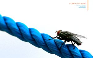 Come Fly with me by aash
