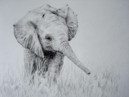 The Baby-Elephant by Idator