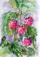 raspberries by danuta50