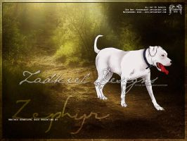 HP - Dogo Argentino by fillyrox