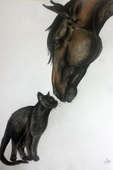 Cat and horse by alvija