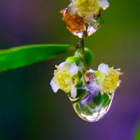 Droplet 38 by josgoh